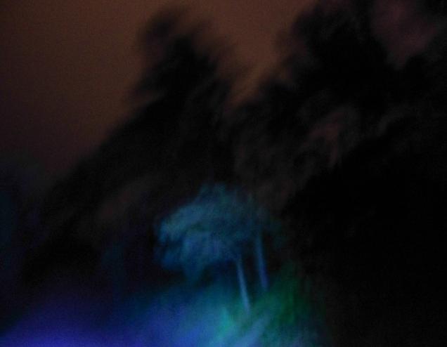 Negra noche en el bosque VI - Jose Antonio Rodríguez - 2015