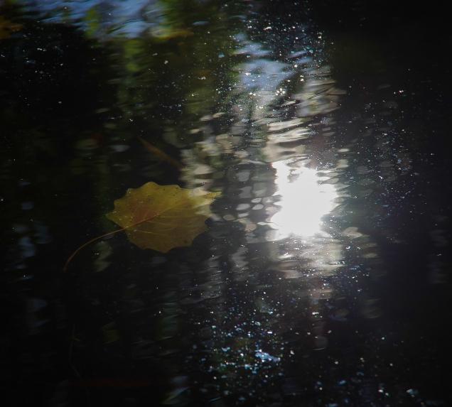 Universos de agua - Jose Antonio Rodríguez - 2016